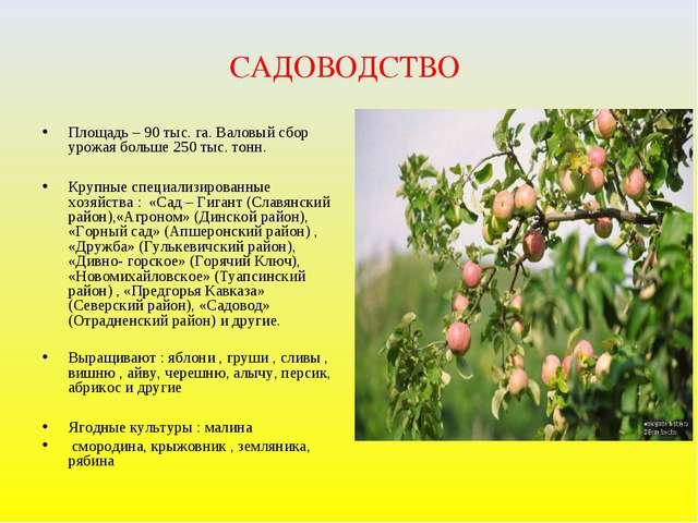 САДОВОДСТВО Площадь – 90 тыс. га. Валовый сбор урожая больше 250 тыс. тонн. К...