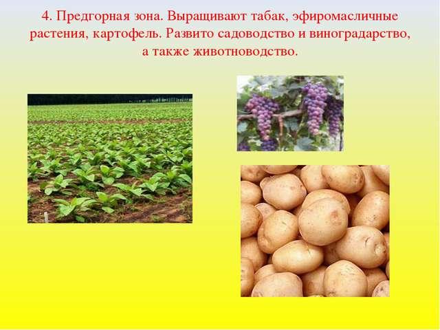 4. Предгорная зона. Выращивают табак, эфиромасличные растения, картофель. Раз...