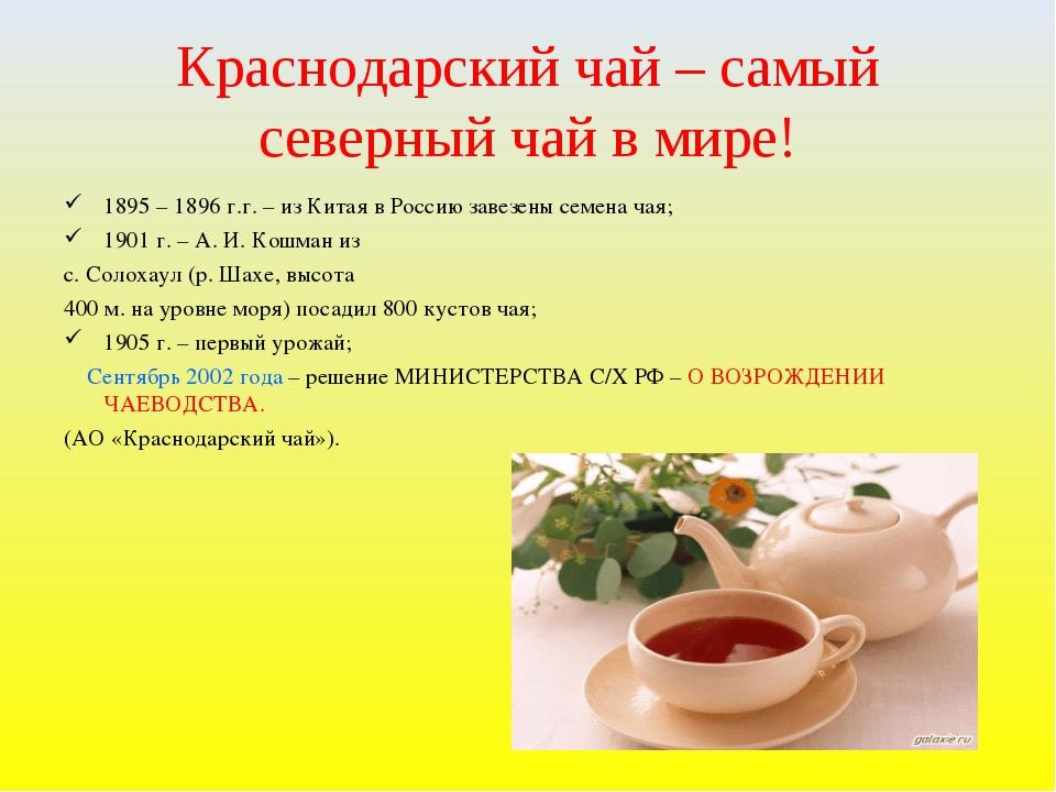Краснодарский чай – самый северный чай в мире! 1895 – 1896 г.г. – из Китая в...