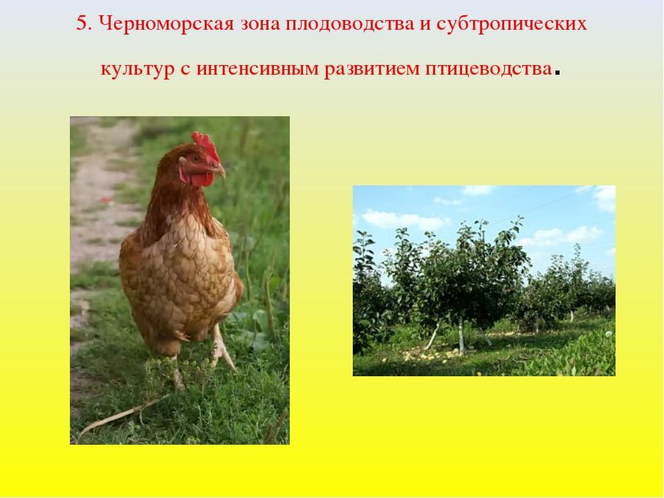5. Черноморская зона плодоводства и субтропических культур с интенсивным разв...