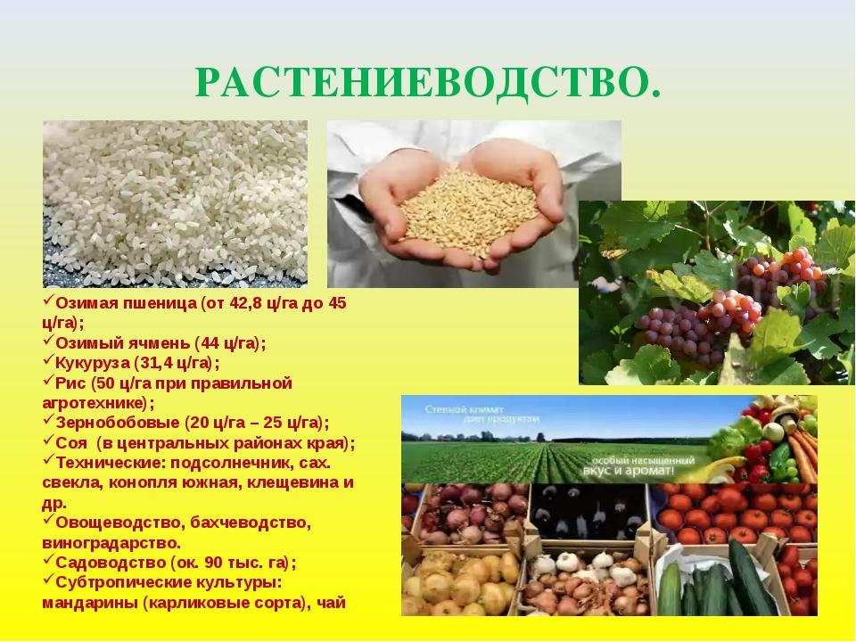 РАСТЕНИЕВОДСТВО. Озимая пшеница (от 42,8 ц/га до 45 ц/га); Озимый ячмень (44...