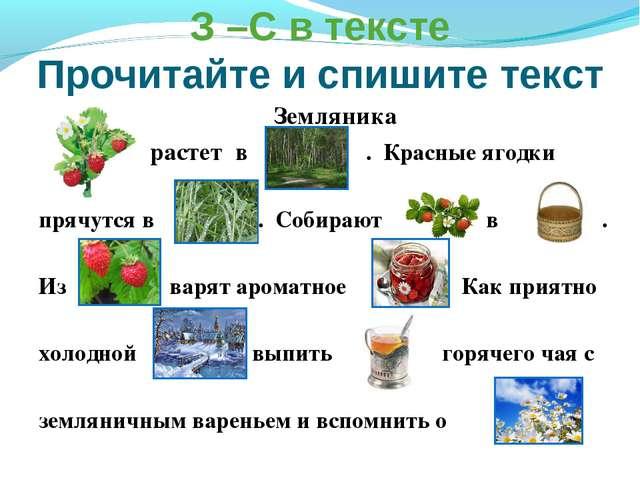 З –С в тексте Прочитайте и спишите текст Земляника растет в . Красные ягодки...