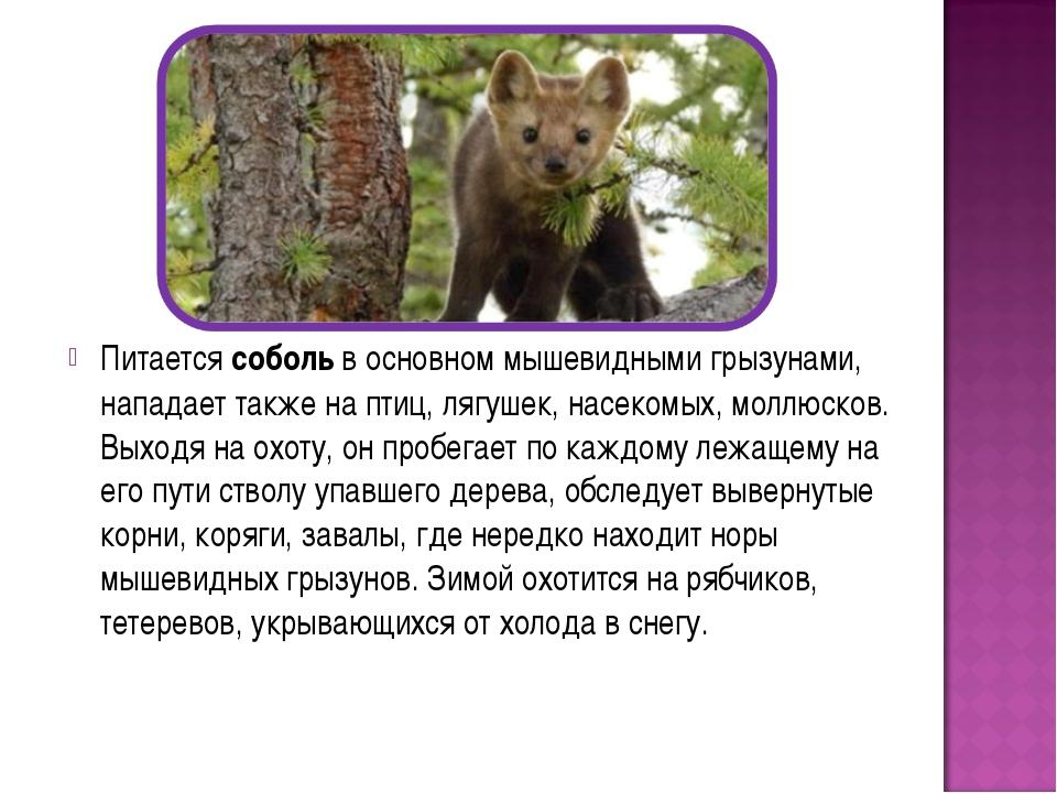 АртКонтракт Всероссийский конкурс Животные Красной