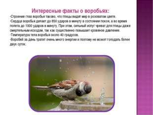 Интересные факты о воробьях: Строение глаз воробья таково, что птицы видят ми