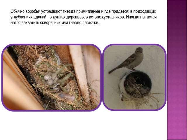 Обычно воробьи устраивают гнезда примитивные и где придется: в подходящих угл...