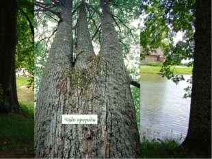 РЕКА ПЛЮССА Усадьба Тригорское Чудо природы