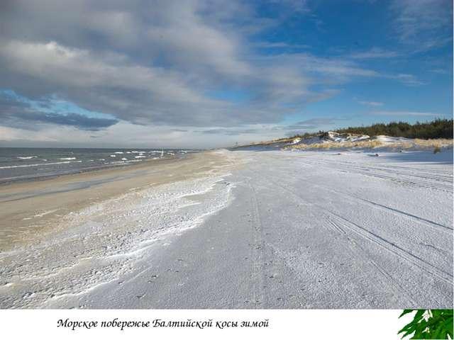 Берег Самбийского полуострова близ Светлогорска Морское побережье Балтийской...
