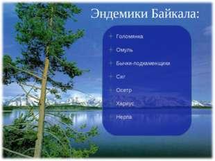 Эндемики Байкала: Голомянка Омуль Бычки-подкаменщики Сиг Осетр Хариус Нерпа