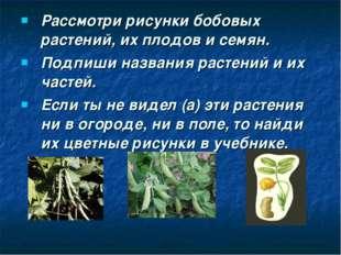 Рассмотри рисунки бобовых растений, их плодов и семян. Подпиши названия расте