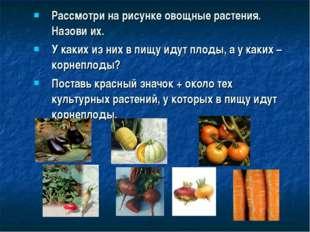 Рассмотри на рисунке овощные растения. Назови их. У каких из них в пищу идут