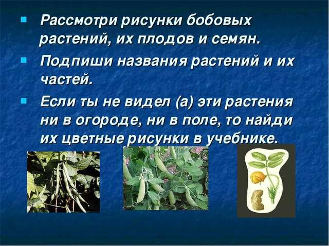 Рассмотри рисунки бобовых растений, их плодов и семян. Подпиши названия расте...
