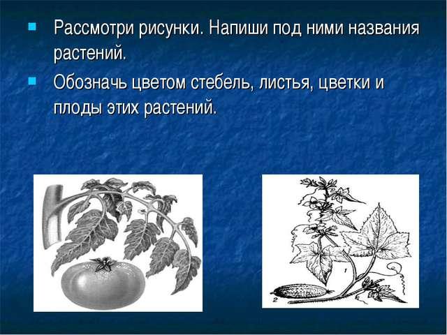 Рассмотри рисунки. Напиши под ними названия растений. Обозначь цветом стебель...