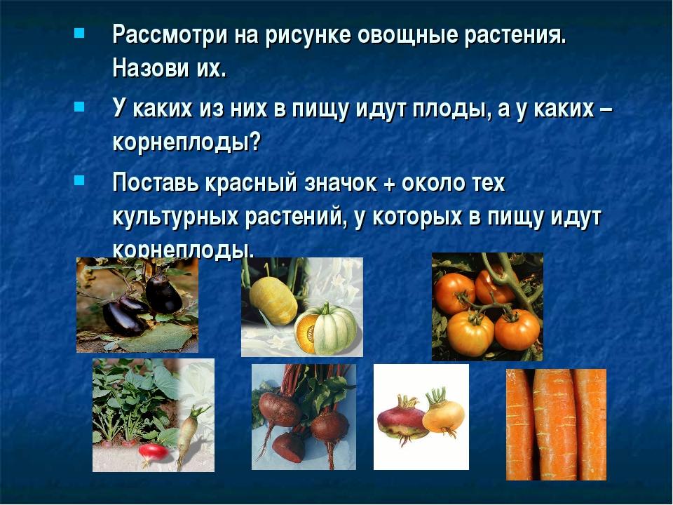 Рассмотри на рисунке овощные растения. Назови их. У каких из них в пищу идут...