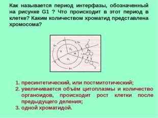 Как называется период интерфазы, обозначенный на рисунке G1 ? Что происходит