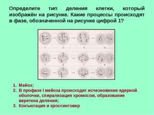 Определите тип деления клетки, который изображён на рисунке. Какие процессы п