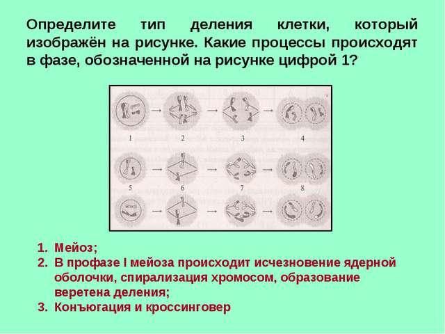 Определите тип деления клетки, который изображён на рисунке. Какие процессы п...