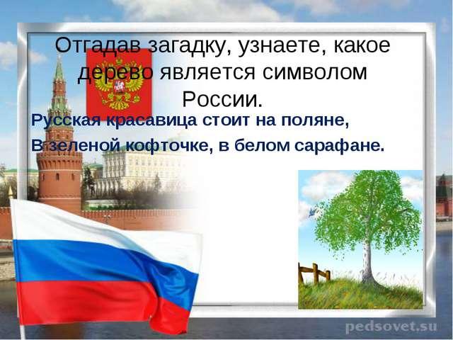 Отгадав загадку, узнаете, какое дерево является символом России. Русская крас...
