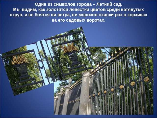 Один из символов города – Летний сад. Мы видим, как золотятся лепестки цветов...