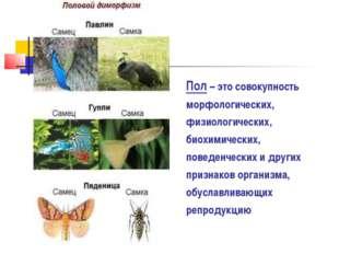 Пол – это совокупность морфологических, физиологических, биохимических, повед