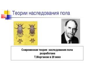 Теории наследования пола Современная теория наследования пола разработана Т.М