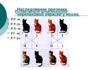 Возможные комбинации: ХВ ХВ- черная кошка Хв Хв- рыжая кошка ХВ Хв- черепахов