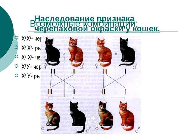 Возможные комбинации: ХВ ХВ- черная кошка Хв Хв- рыжая кошка ХВ Хв- черепахов...