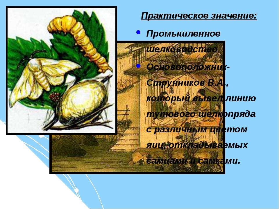 Практическое значение: Промышленное шелководство Основоположник- Струнников В...