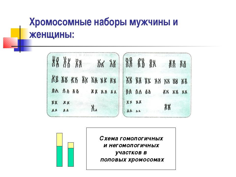 Хромосомные наборы мужчины и женщины: Схема гомологичных и негомологичных уча...