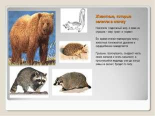 Животные, которые залегли в спячку Накопили подкожный жир, и зима не страшна