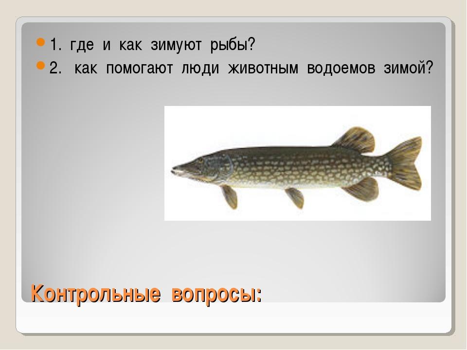 Контрольные вопросы: 1. где и как зимуют рыбы? 2. как помогают люди животным...