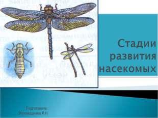 Подготовила : Мухамадеева Л.Н.