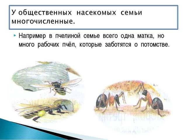Например в пчелиной семье всего одна матка, но много рабочих пчёл, которые за...