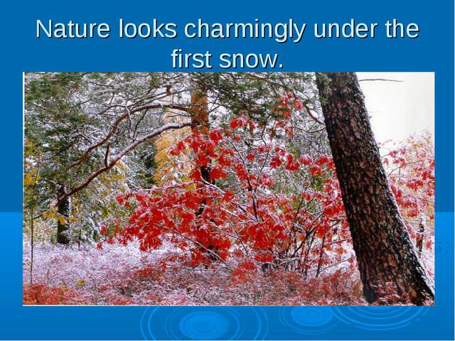 Nature looks charmingly under the first snow.