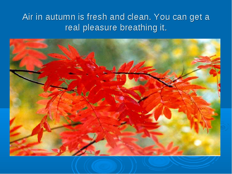 Air in autumn is fresh and clean. You can get a real pleasure breathing it.