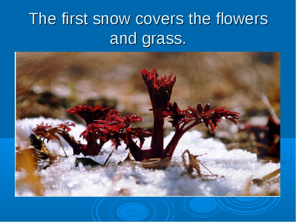 The first snow covers the flowers and grass.