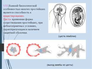VIII.Важной биологической особенностью многих простейших является способност
