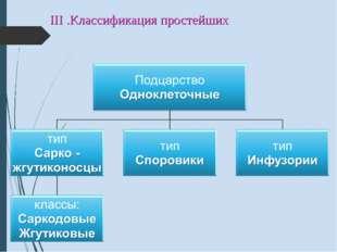 III .Классификация простейших