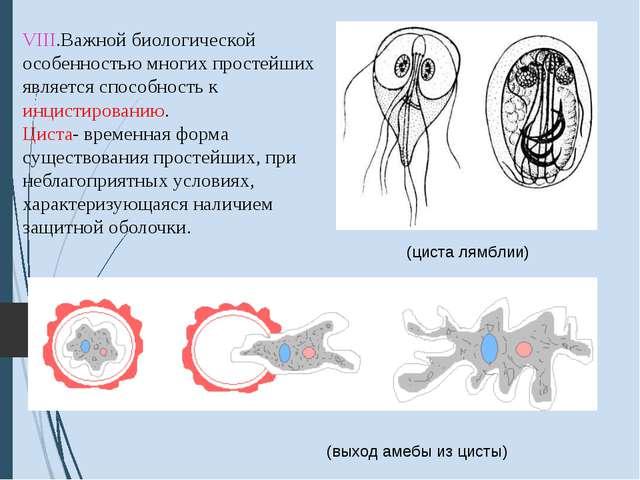 VIII.Важной биологической особенностью многих простейших является способност...