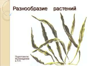 Разнообразие растений Подготовила: Мухамадееева Л.Н.