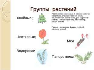 Группы растений Хвойные; Цветковые; Водоросли; Различаются хвоинками. У ели о