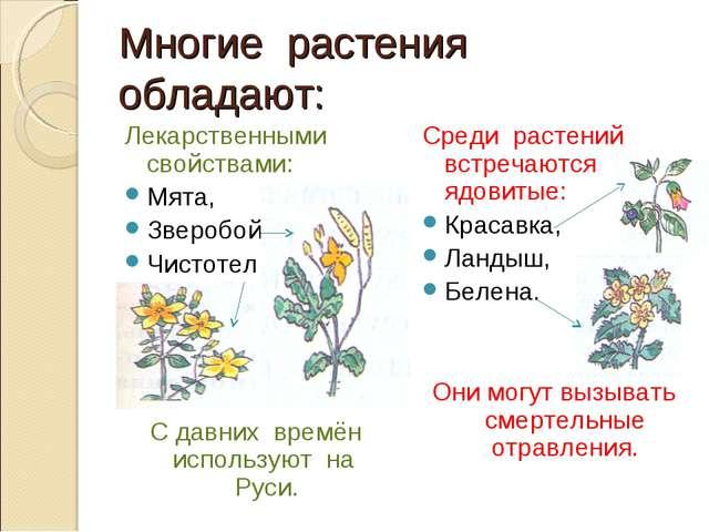 Многие растения обладают: Лекарственными свойствами: Мята, Зверобой, Чистотел...