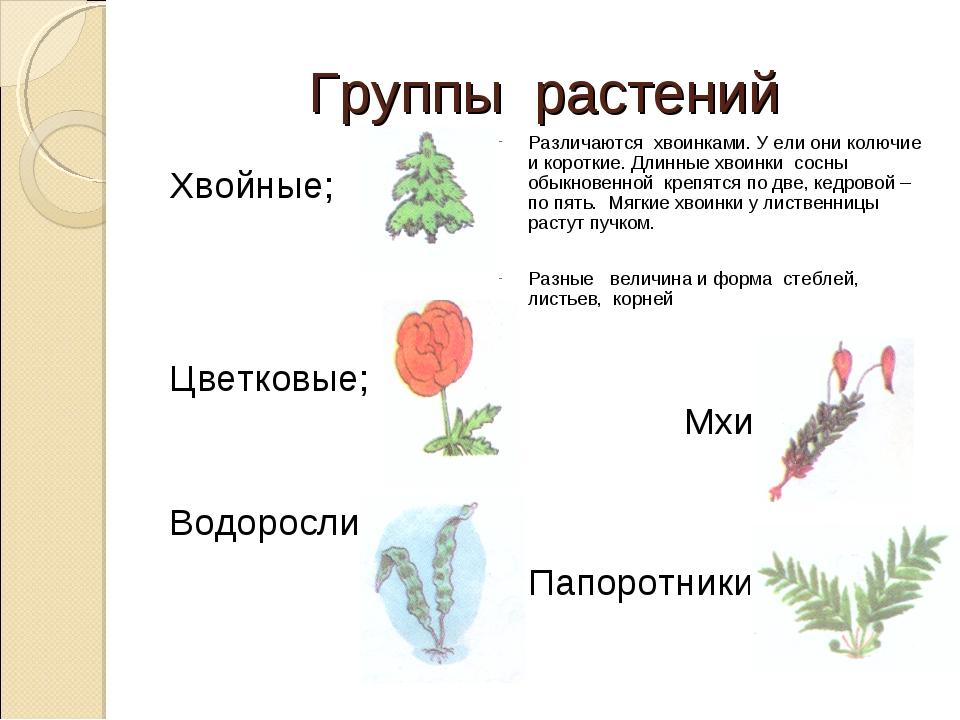 Группы растений Хвойные; Цветковые; Водоросли; Различаются хвоинками. У ели о...