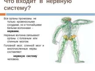 Что входит в нервную систему? Все органы пронизаны не только кровеносными сос