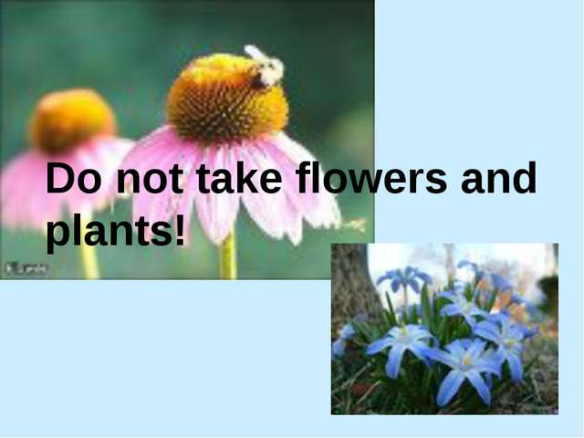 Do not take flowers and plants!