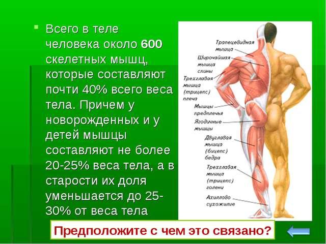 Всего в теле человека около 600 скелетных мышц, которые составляют почти 40%...