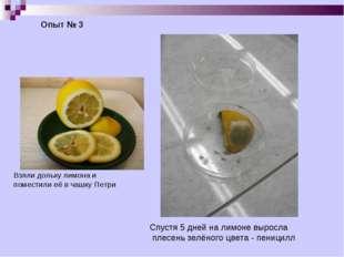 Опыт № 3 Взяли дольку лимона и поместили её в чашку Петри Спустя 5 дней на ли