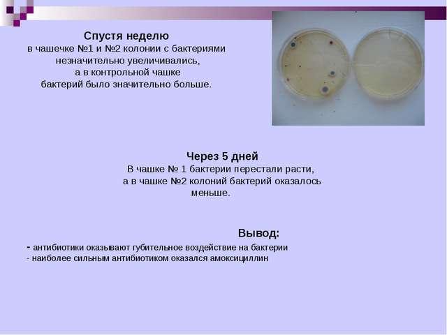 Спустя неделю в чашечке №1 и №2 колонии с бактериями незначительно увеличивал...
