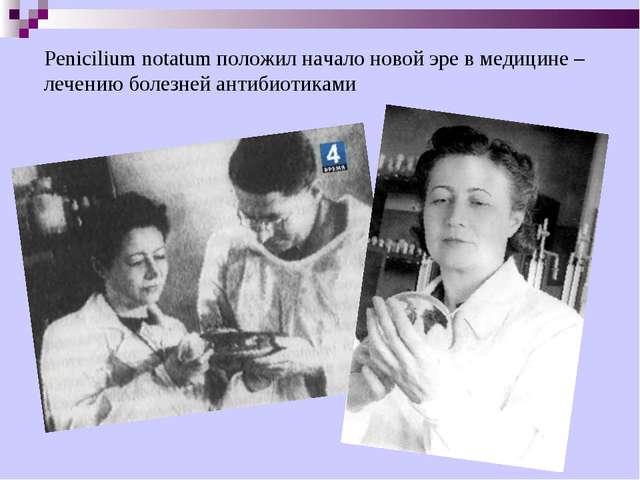 Penicilium notatum положил начало новой эре в медицине – лечению болезней ант...