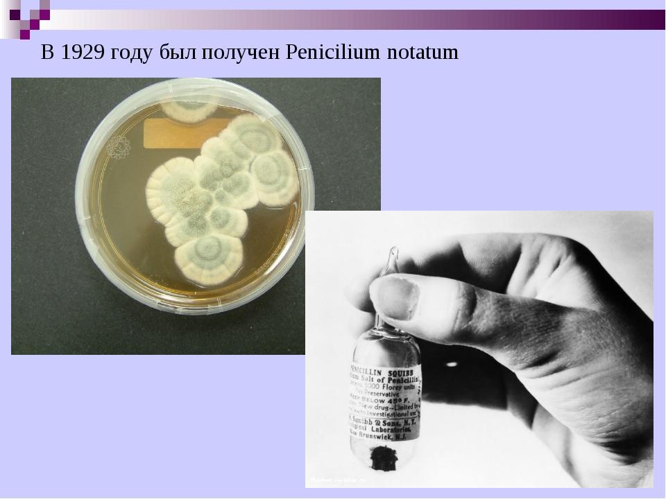 В 1929 году был получен Penicilium notatum