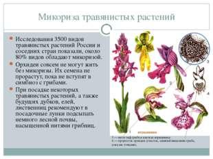 Микориза травянистых растений Исследования 3500 видов травянистых растений Ро